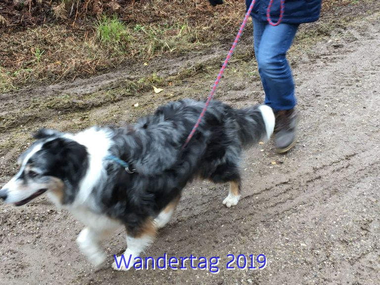 20191111_Wandertag_2019_006_ergebnis