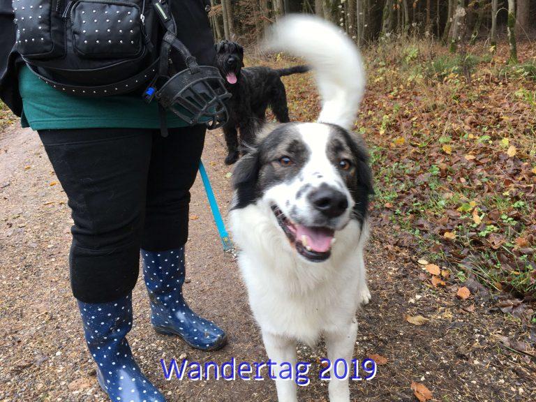 20191111_Wandertag_2019_011_ergebnis